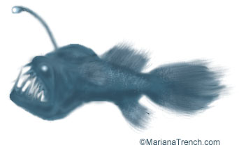 The mariana trench biology part 1 the mariana trench biology publicscrutiny Images